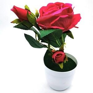 Imagen de Planta con flores de rosas, varios colores
