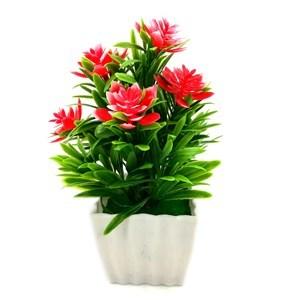 Imagen de Planta con flores maceta labrada, en caja, varios colores