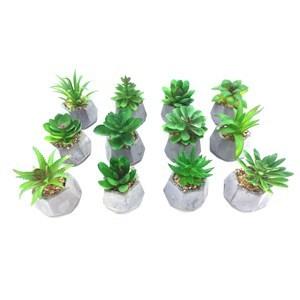 Imagen de Planta cactus suculenta en maceta, varios diseños