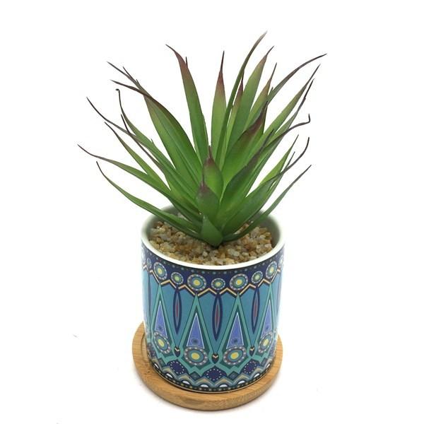 Imagen de Planta cactus suculenta en maceta con plato de bambú, varios diseños