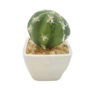 Imagen de Planta cactus suculenta en maceta, varios modelos