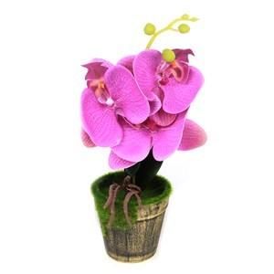 Imagen de Planta con flores de orquídea